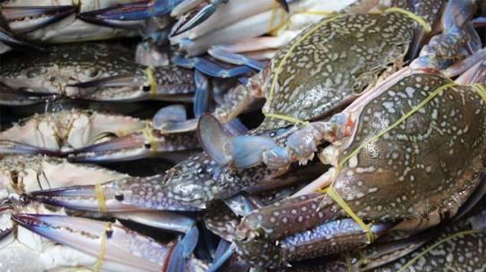 Cách chế biến hải sản giữ nguyên hương vị tươi ngon