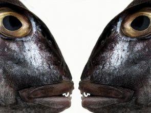 Tò mò với món ngon Mắt Cá