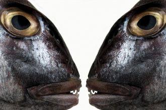 xl_19376_Fish-eyes-TP.jpg